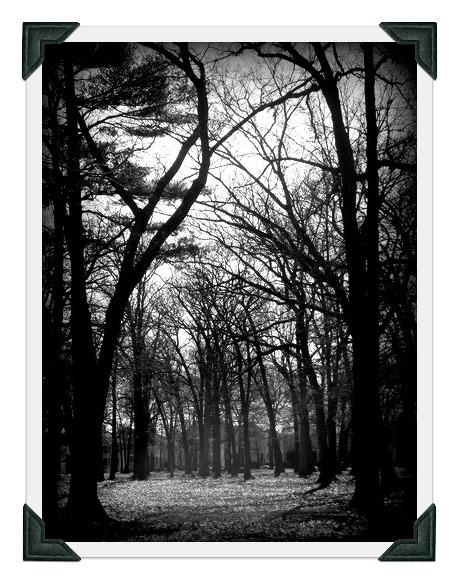 Brooklawn Park 3boost41photo cornersjpg