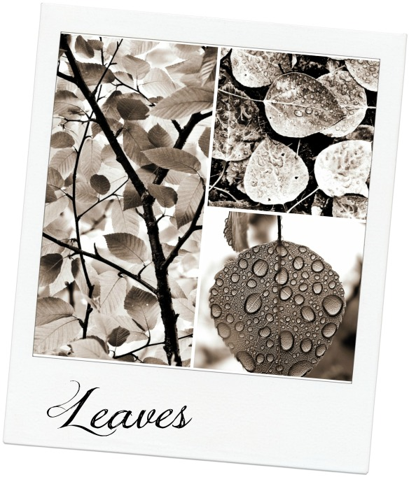 leaves for platters with textjpg